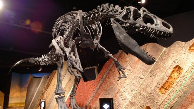 Journey Museum & Learning Center_dinosaur skelton_Journey Museum & Learning Center