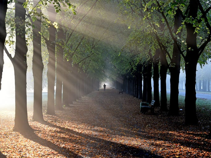 A stroller walks along linden trees during early morning