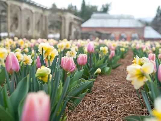 636262102057809791--SCS9291-032017-WalledGrdn-Tulips-Daffodils.jpg