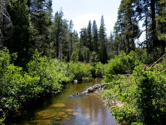 In this Tuesday, July 25, 2017 photo, the North Fork of Prosser Creek flows through the Lower Carpenter Valley near Truckee, Calif.  The wild Sierra Nevada meadow hidden from public view for more than a century is opening for tours after it was purchased by conservation groups. The North Fork of Prosser Creek was once home to native Lahontan cutthroat trout, a threatened species that could be reintroduced if no natural population has remains.