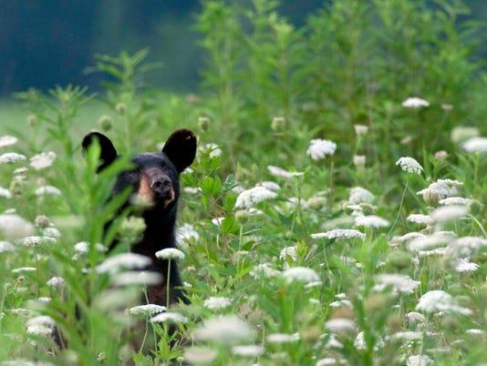 KNS-bears-0703-01