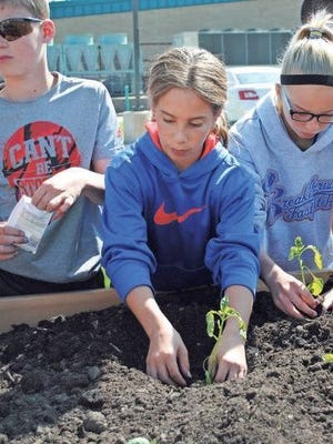 Students at Mary Welsh Elementary School planted vegetables and seeds Thursday, May 19, in a raised garden at the school. The garden was constructed with funds received from a grant from New Pioneer Co-op, Iowa City.