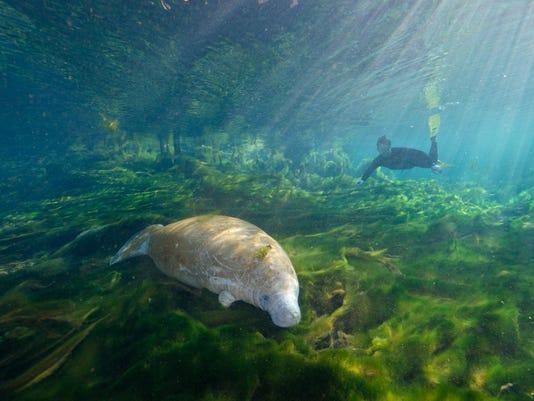 Florida Wildlife Corridor Expedition: Glades to Gulf