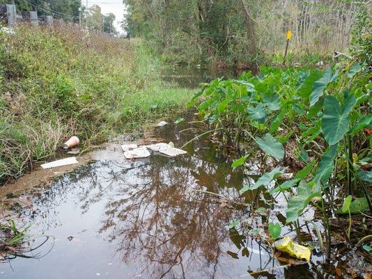 Carpenter's Creek headwaters