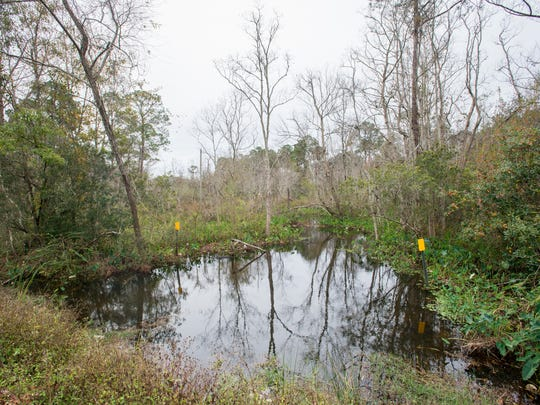The headwaters for Carpenter's Creek off Olive Road