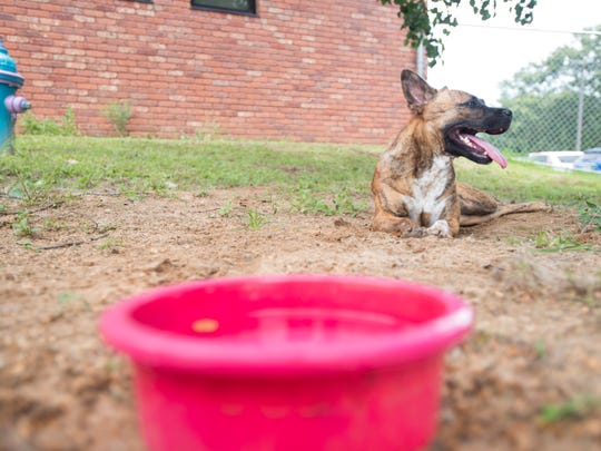 Hazel takes a break from running around in the yard at the Escambia County Animal Shelter in Pensacola on Friday, May 25, 2018.