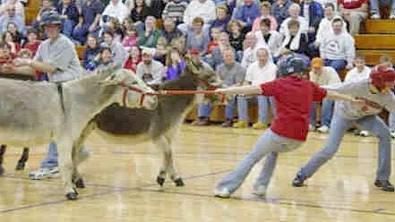 A couple of Donkey Ball players lead their stubborn donkeys as they stretch out to get the ball. The Skyline FFA is hosting a donkey ball game at 7 p.m. on Tuesday, March 10 at the Skyline Thunderdome. The game is a fundraiser for the Skyline FFA members to attend a conference in Washington D.C. from July 21-26.