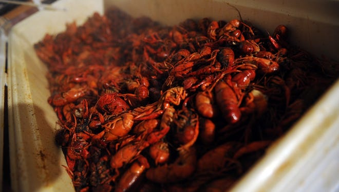 About 7,000 pounds of live crawfish was ordered to feed event-goers at Cajun Fest in 2016. The 10th annual Cajun Fest descends on downtown Wichita Falls May 13.