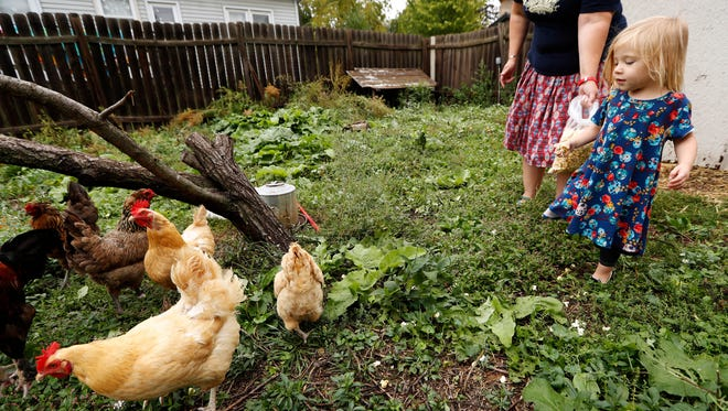 In this Sept. 26 photo, Iolana Keith, of Des Moines, feeds chickens in the backyard with her mom, Tanya Keith.