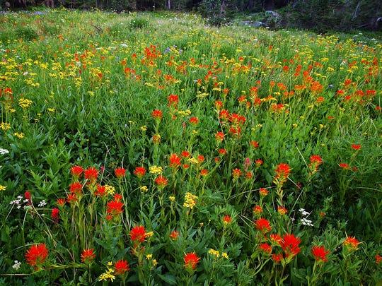 Wildflowers bloom in Jefferson Park in late summer.