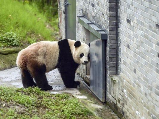 China US Panda