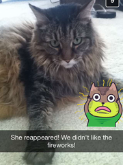 A picture of Allison's Ford cat sent to her over Snapchat