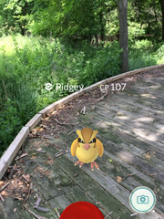 """Pokemon Go character """"Pidgey"""" is shown at the Craddock"""