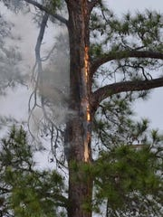 A pine tree caught fire outside Consina Griffin-Geraux's kitchen window, set off by a blast of lightning Wednesday