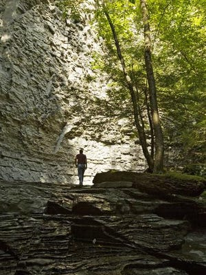 Andrew Zepp, the executive director of the Finger Lakes Land Trust walks in the trust's Sweedler and Thayer Preserves at Lick Brook in the Town of Ithaca in 2011.