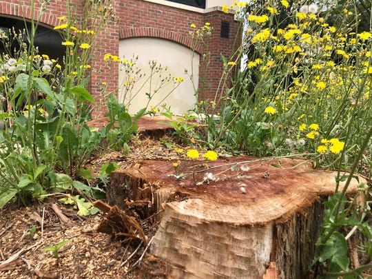 Duke Energy recently cut down three large trees at