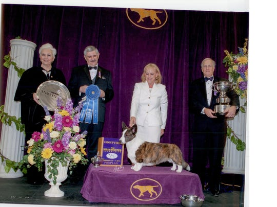 Walter Sommerfelt awards a group first at the 2014 Westminster Kennel Club Dog Show to Grand Champion Riverside's Telltail Coco Posh,  a Cardigan Welsh Corgi.