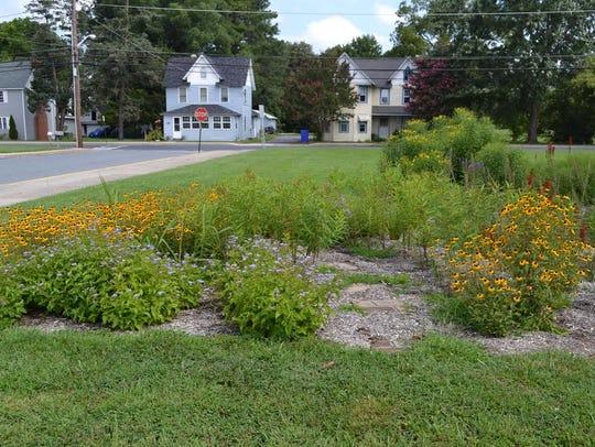 The rain garden at Millsboro Middle School features