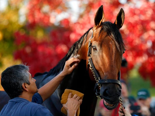 Horse Racing: 32nd Breeders Cup-Workouts
