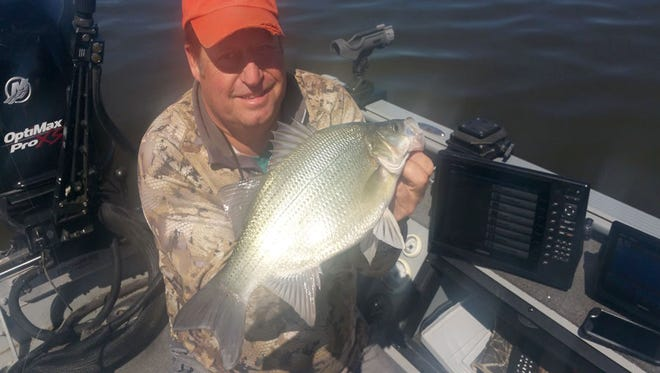 Rod Eberly of Appleton established the first record in Wisconsin's live release fish record program with this  17.75-inch white bass he caught, photographed and released while fishing May 8 on the Fox River in Brown County.
