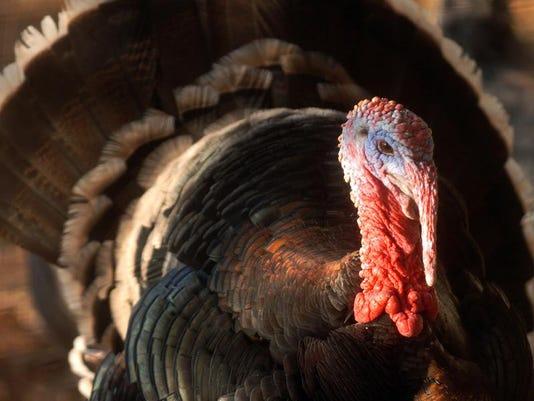 MNCO 0427 Dick Martin Feature on Spring Turkey tips.jpg