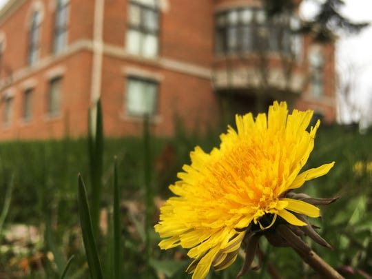 All parts of the dandelion are edible.