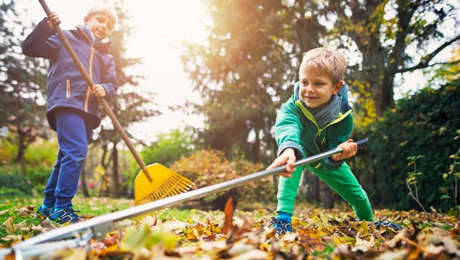 Little boys raking autumn leaves. Two brothers aged 7 are helping to clean autumn leaves from the garden lawn.