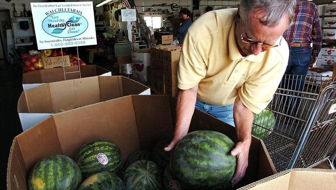 A man grabs a seedless watermelon from a bin at Walchli Farms near Hermiston.