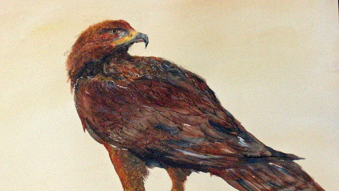 Golden eagles from breeding grounds in northeast Canada migrate south to overwinter in WNC.