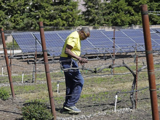 Dusty Baker walks through his vineyard with solar panels in the background at his home in Granite Bay, Calif.