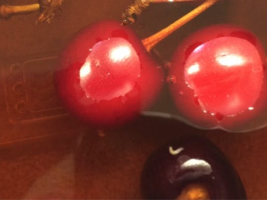 A tiny white worm -- the spotted wing drosophila maggot -- can be seen having emerged from tart cherries.