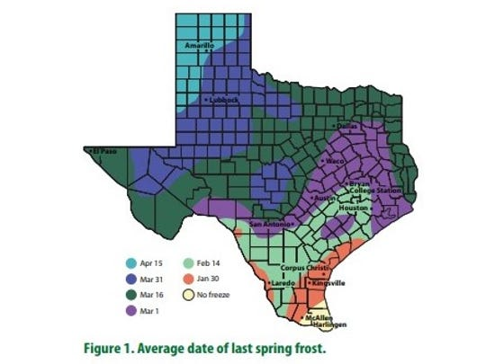 According to the National Weather Service, the annual last freeze in Abilene is March 22.