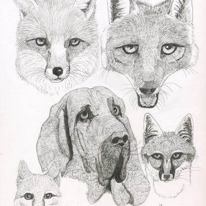 Illustrated are red fox (top left), coyote (top right),