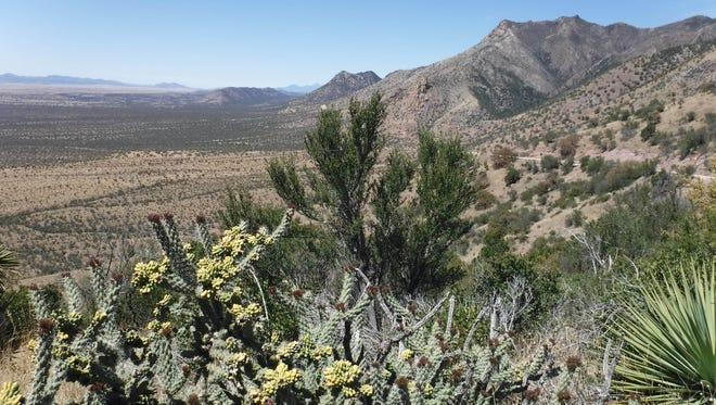 Surveyors marking the border had to traverse the Huachuca Mountains near present-day Hereford, Arizona.