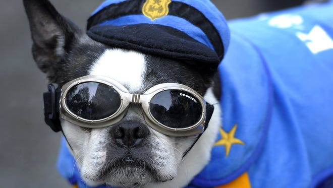 """A dog is dressed as a prison guard during the 17th annual """"Doggie Costume Halloween Party"""" at Riverside Park in New York on Oct. 30, 2011."""