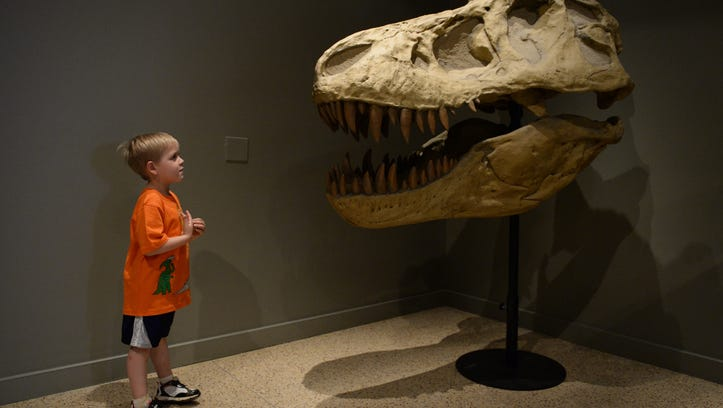 Skip Hommer checks out a cast of a fossil skull of a Tyrannosaurus Rex in the Rex Room at the Smithsonian's Museum of Natural History on May 1, 2014.