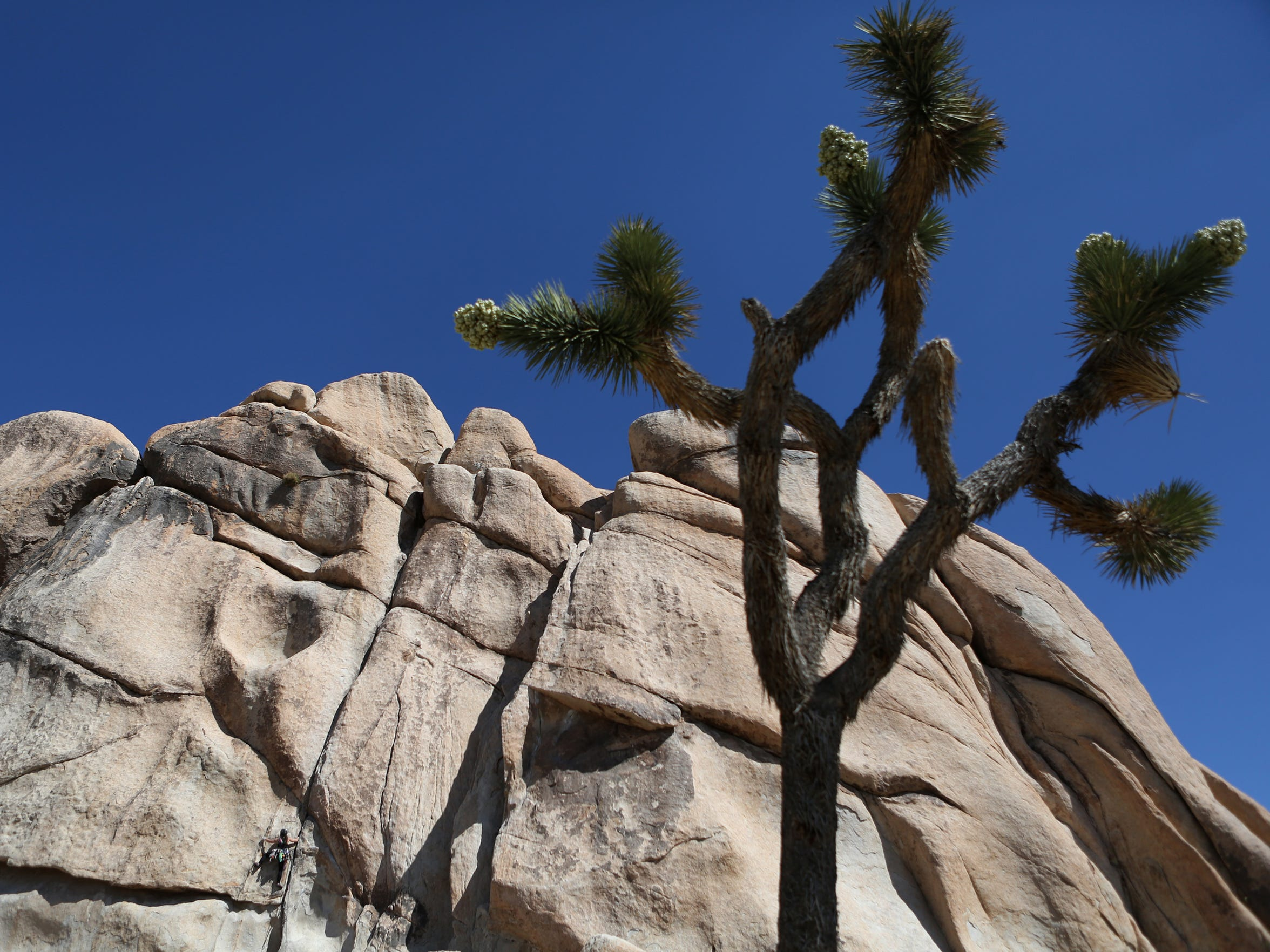 A climber makes her way up a boulder in Hidden Valley on March 18 in Joshua Tree National Park.