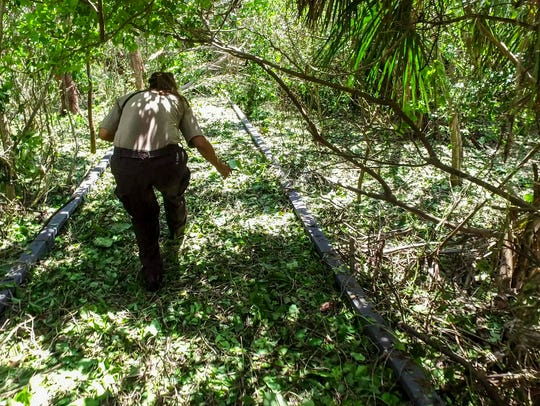 Toni weaves her way onto the Calusa Shell Mound Trail