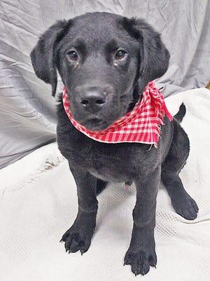 Robert the puppy