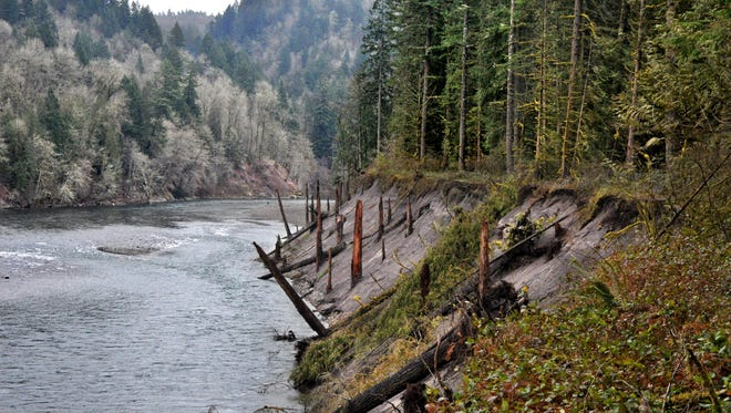 The snags in the sandy riverbank of the Sandy River were washed down from Mount Hood's 1781 eruption. The snags in the sandy riverbank of the Sandy River were washed down from Mount Hood's 1781 eruption.
