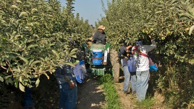 For the 2018 ASABE Student Robotics Challenge, teams will simulate the mechanical harvest and storage of apples.