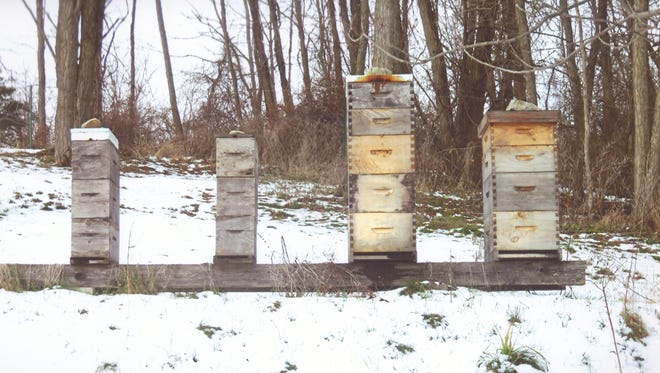 There are thousands of boxed hives in the valley (like these in Greenport) filled with honeybees enjoying Christmas Day.