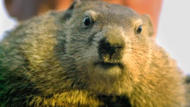 Punxsutawney Phil will be the focus of local and national newscasts on Feb. 2.
