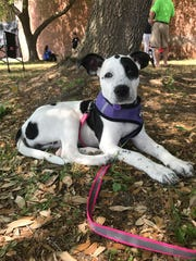 Savannah Porter rescued Clementine, one of the two dogs she owns. Porter was not in support of the proposed pet fee.