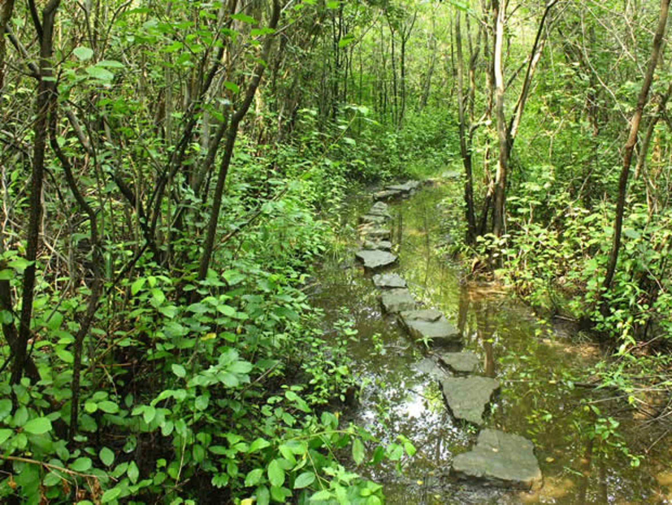 Hipp Brook Preserve is mostly wetland.