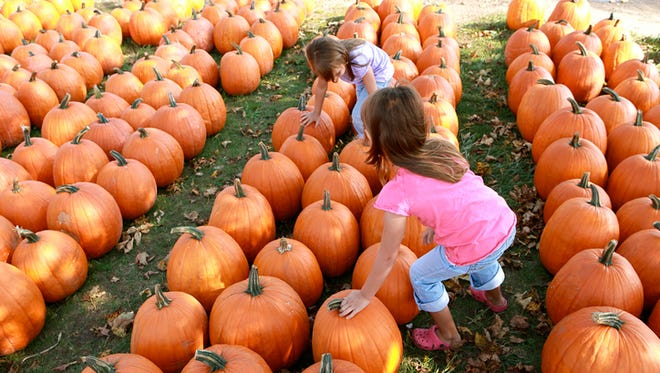 Two little girls in a field of pumpkins, trying to choose the perfect one.