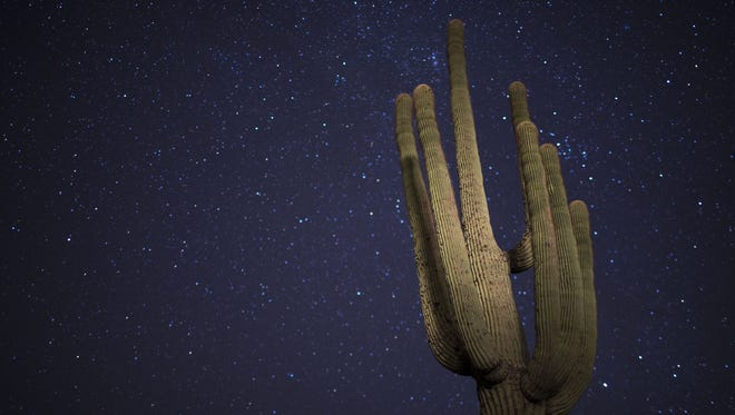 A saguaro is illuminated by headlights from passing cars on Interstate 17 against the northern horizon on a recent moonless night south of Black Canyon City.
