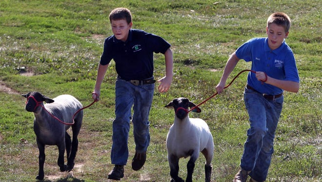 Dale Mastin, left, and his brother Brent exercise two of the market lambs they will show in the Boone County 4-H and Utopia Fair in 2012. The boys run with the lambs to develop muscles in their legs. They are on their family farm in Petersburg.