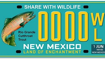 A new state license plate features the cutthroat trout, the state fish. Proceeds benefit the Share with Wildlife program.