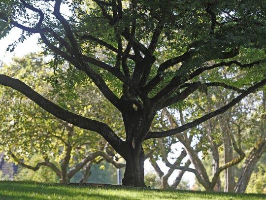 Bush's Pasture Park.